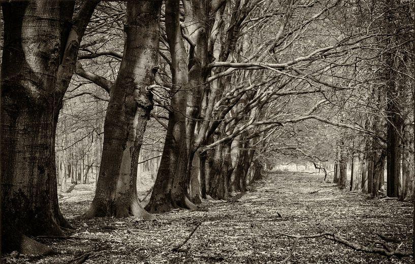 Koninklijke bomenlaan van Eddie Meijer