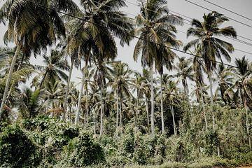Palmen von Fotoverliebt - Julia Schiffers