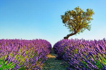 Die Provence von Manjik Pictures