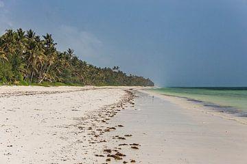Parelwit strand en wuivende palmbomen op Zanzibar van