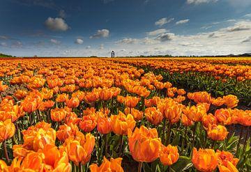 Oranje tulpen,Hollandse luchten van peterheinspictures