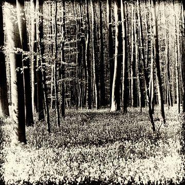 Hallerbos 2 von Esther Swaager ( Studio Toet)