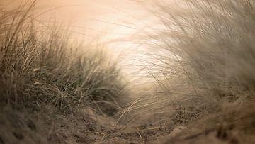 Ein Wanderweg durch die Dünen von Johannes Schotanus