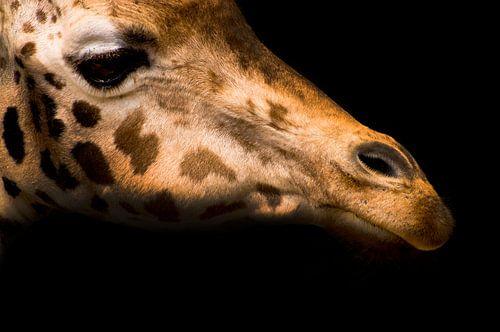 Giraffe van Saskia Staal