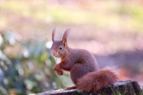 Nieuwsgierig Eekhoorntje van LHJB Photography