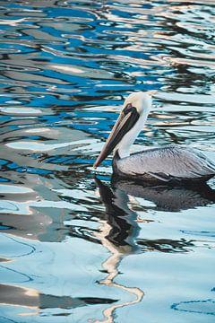 Een mannetjes pelikaan in het water von Ineke Huizing