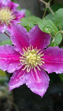 Flower van Ria De Jonge