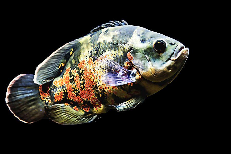 Mooi gekleurde vis  van Art by Jeronimo