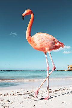 Flamingo op Aruba