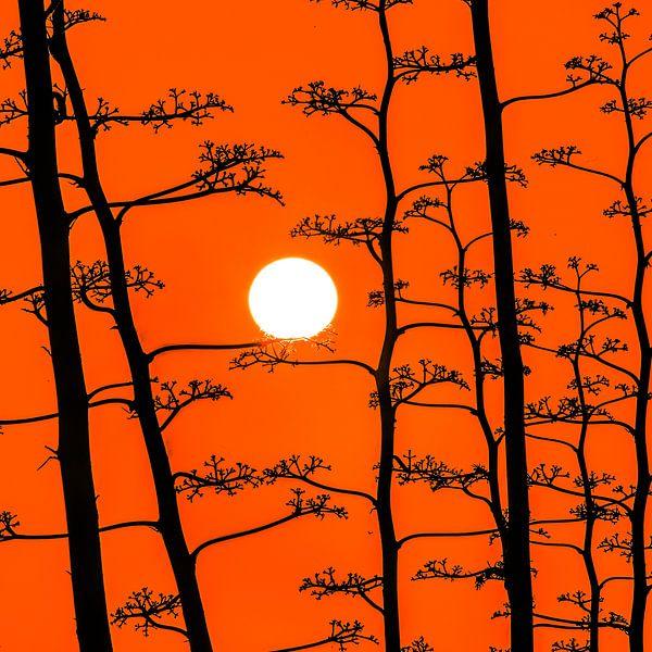 Agave zonsondergang van Harrie Muis