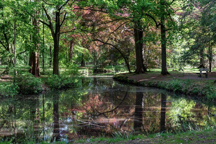 Herfstkleuren in het bos van Ingrid Aanen