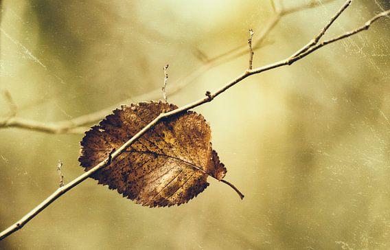 Herfstig boomblad van Ellen Driesse