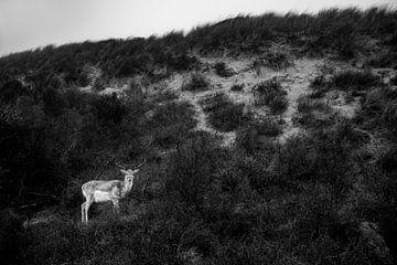 Hert in de duinen van Yana Spiridonova