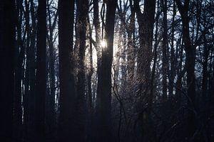 Zonlicht schijnend door de bomen van