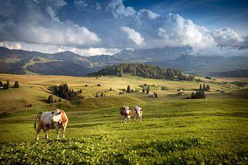 Alpe di Siusi - Seiseralm  von Jordy Caris