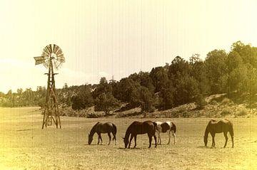 Paarden en Windmolen van Paul van Baardwijk