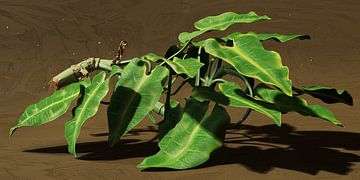 Kronkelplant