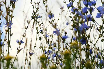 Wilde bloemen bewegen in de wind van Helene van Rijn