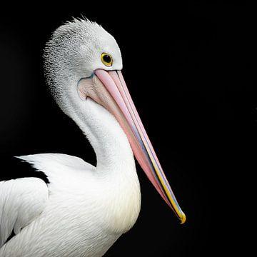 Porträt eines Pelikans auf schwarzem Hintergrund von Els Peelman