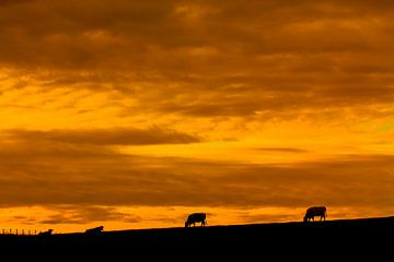 Zonsondergang boven  grazende koeien van