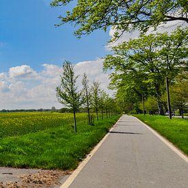 Piste cyclable, champ de colza près de Vilmnitz, île de Rügen sur GH Foto & Artdesign