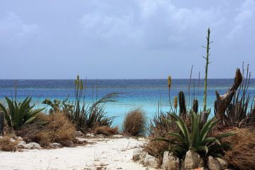 malmok beach von gea strucks