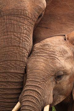 Nahaufnahme von Mutter und Kalb eines afrikanischen Elefanten von Bobsphotography