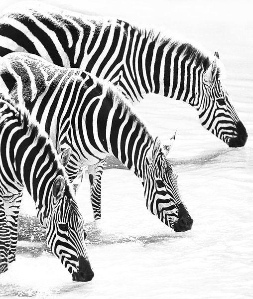 Milky Zebras van Roland Smeets