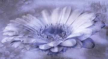 Gerbera lila, mit Text von Rietje Bulthuis