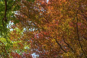 Kleuren van de natuur