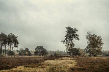 Landschap Leersumse veld, Leersum  van Watze D. de Haan