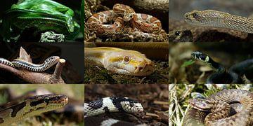 Schlangen-Collage van