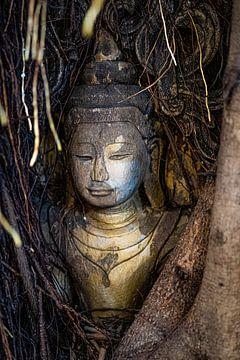 Buddha Kopf im Baum von Bernd Hartner
