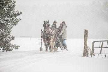 Ameland Pferdeschlitten von Nicole Nagtegaal