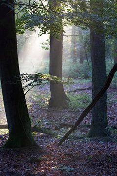Les premiers rayons de soleil dans la forêt (3) sur rene marcel originals
