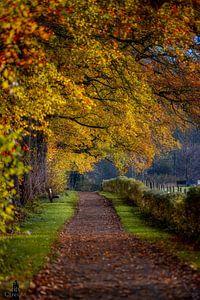 Amelisweerd in de herfst van Robin Pics (verliefd op Utrecht)