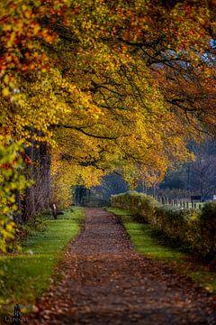 Amelisweerd im Herbst von Robin Pics (verliefd op Utrecht)
