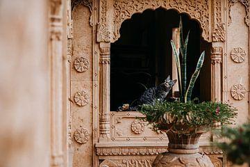 Chat dans une forteresse en Inde | Couleurs pastel | Photographie sur Yvette Baur
