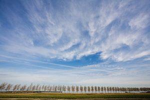 Bomenrij in de provincie Zeeland van