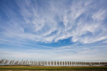 Bomenrij in de provincie Zeeland van Rens Kromhout
