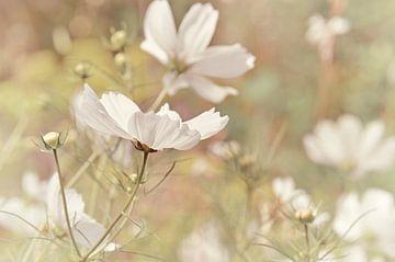 Sommerwiese von Violetta Honkisz