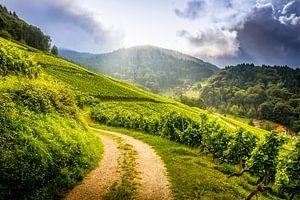 Weinlehrweg - Kappelrodeck - Schwarzwald von
