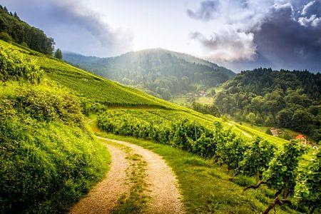 Wine in progress - Schwarzwald (Black Forrest)