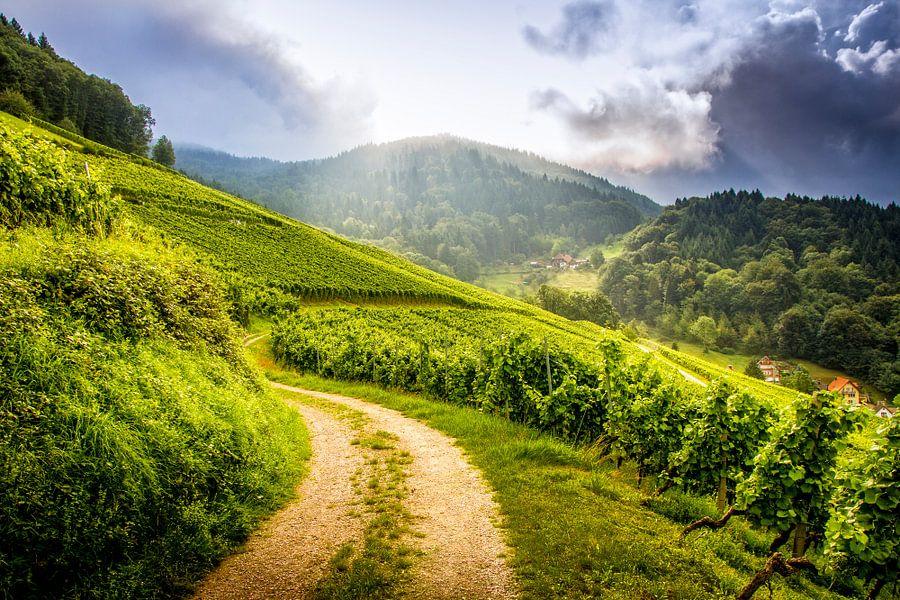 Wine in progress - Schwarzwald (Black Forrest) van juvani photo