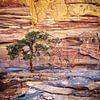 boom op de rotsen - Petra, Jordanië van Jan de Vries thumbnail