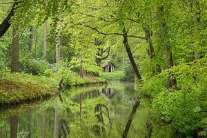 Huisje in het bos van