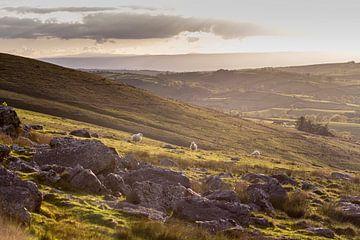 Wales von Marcel Bil