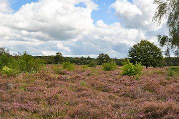 die Heide in Ermelo im September von Heleen de Silva
