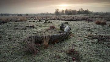 Loonse en Drunense Duinen 01 von Gerhard Niezen Photography