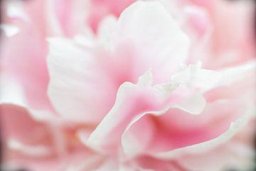 Makrofoto der Blütenblätter der Pfingstrose. von Monique van Helden